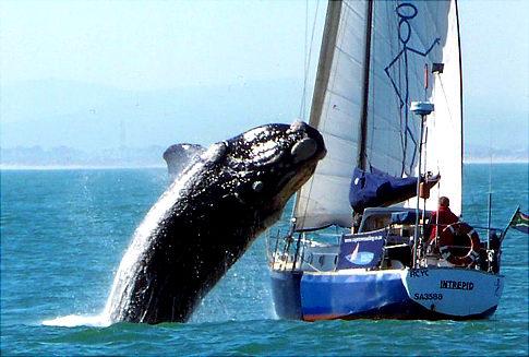 Alg_whale_attack