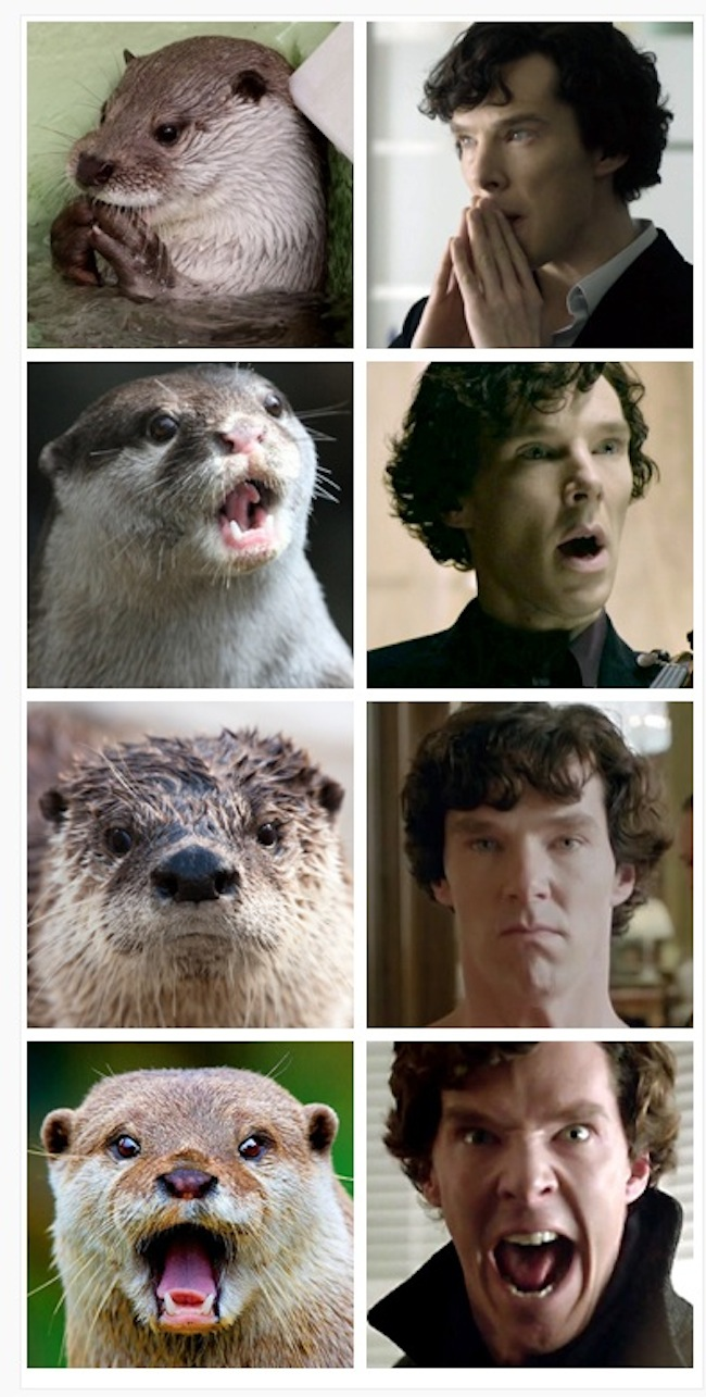 Otters-Who-Look-Like-Benedict-Cumberbatch1