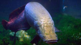 Fishy Armor